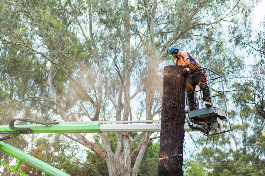 Singleton Tree Services »