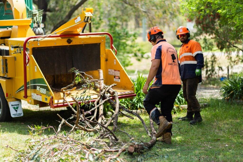 Tree Removal Hunter Valley »