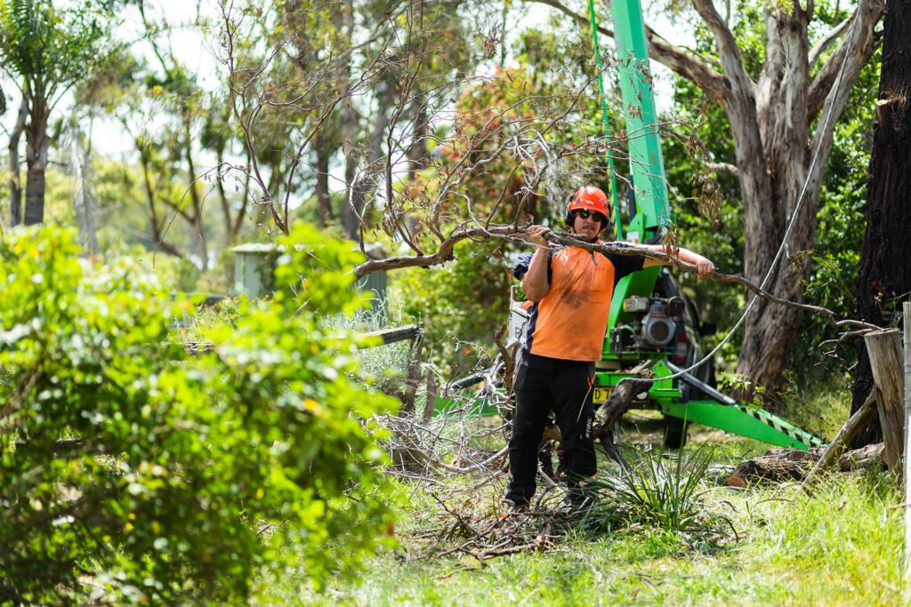 Land Clearing »